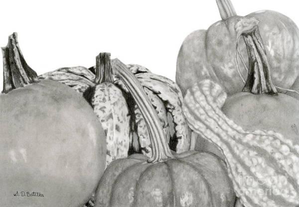 Hand Drawn Drawing - Autumn Harvest On White by Sarah Batalka