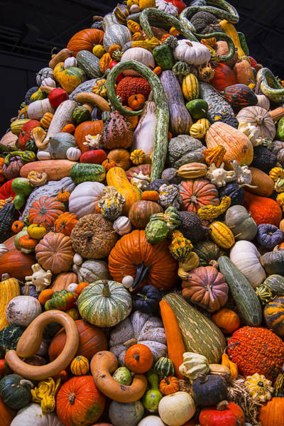Gourd Photograph - Autumn Harvest Pile by Garry Gay