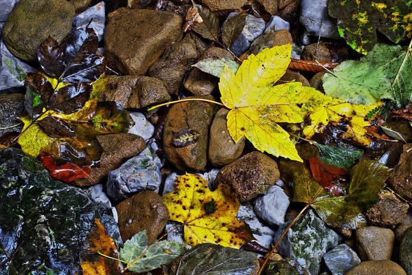Photograph - Autumn Has Arrived by Ivan Slosar
