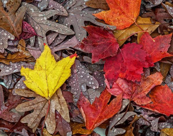 Photograph - Autumn Has Fallen by Lara Ellis