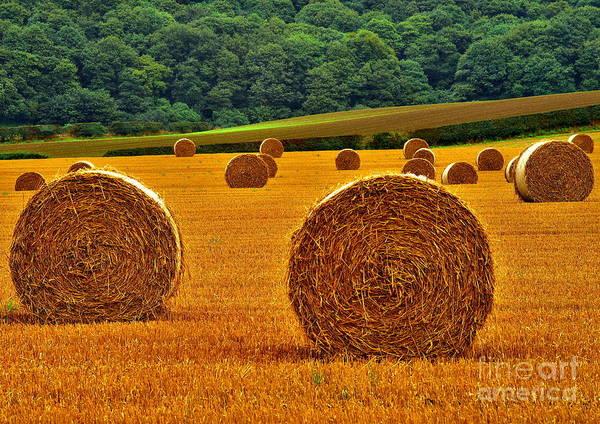 Autumn Hay Bales Art Print