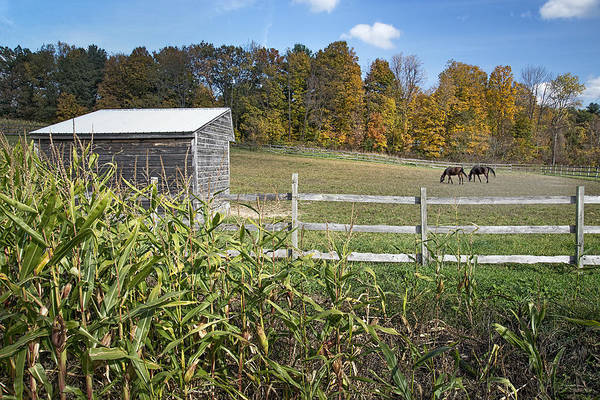 Voorheesville Photograph - Autumn Horses by Ray Summers Photography