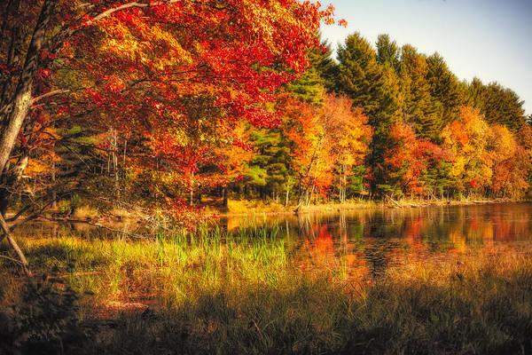 Photograph - Autumn Hot Mess by Robert Clifford
