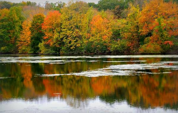 Stamford Photograph - Autumn I Say by Diana Angstadt