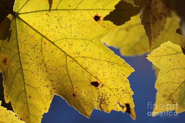 Photograph - Autumn No. 1 by Todd Blanchard