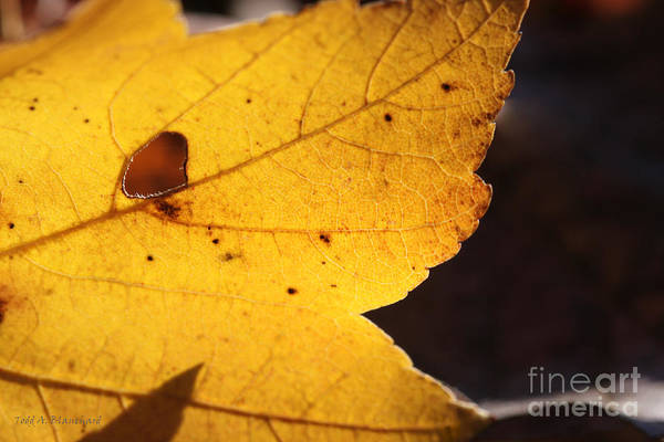 Photograph - Autumn No. 3 by Todd Blanchard