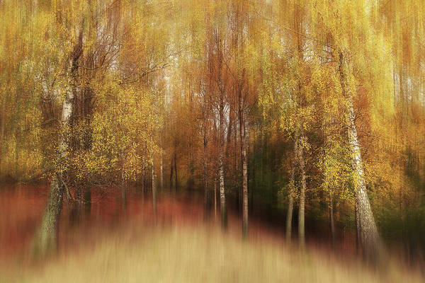 Wall Art - Photograph - Autumn Impression by Gustav Davidsson