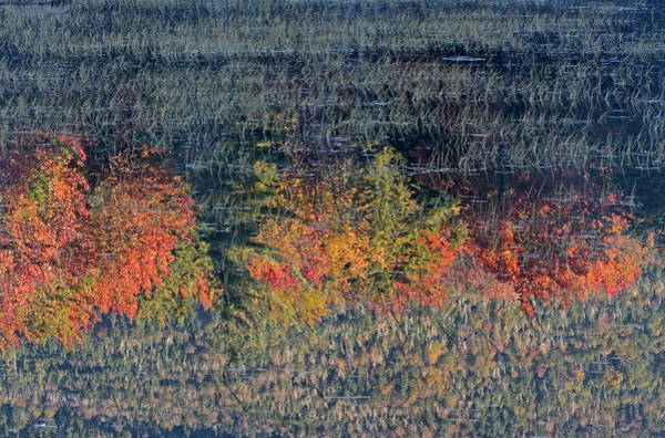 Photograph - Autumn Impressionism by Juergen Roth