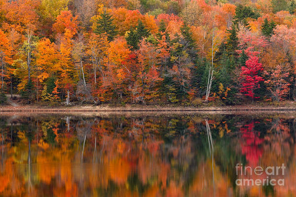 Photograph - Autumn Impressions by Charles Kozierok