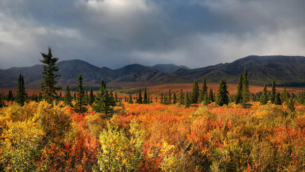 Photograph - Autumn In Alaska by Darlene Bushue