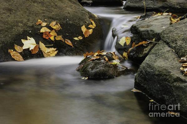 Photograph - Autumn In Hackelbarney II by Debra Fedchin