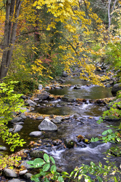 Photograph - Autumn In Lithia Park by Loree Johnson