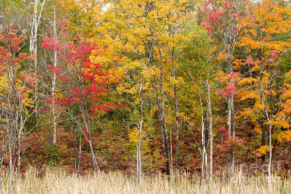 Photograph - Autumn In Muskoka by Les Palenik