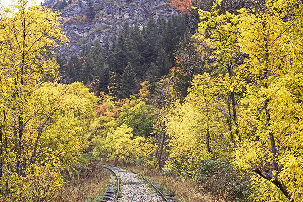 Photograph - Autumn In Provo Canyon Utah by Craig Ratcliffe