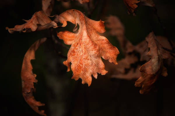 Orange Wood Photograph - Autumn Is In The Air by Tom Mc Nemar