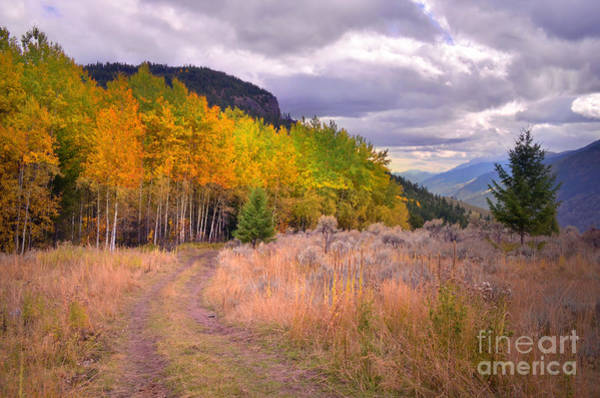Photograph - Autumn In The Mountains by Tara Turner