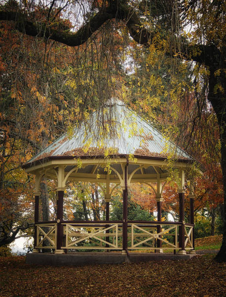 Photograph - Autumn In The Park by Kim Andelkovic