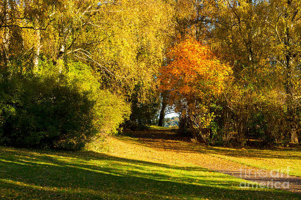 Photograph - Autumn In The Park by Lutz Baar