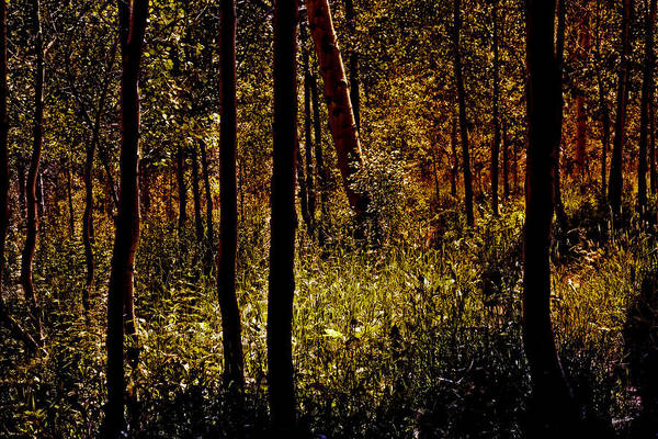 Wall Art - Photograph - Autumn In Vail - Colorado by Madeline Ellis