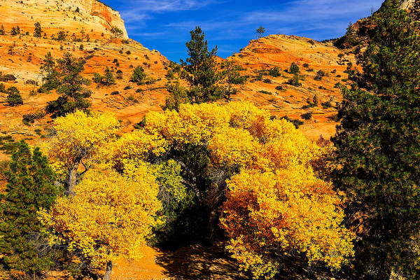 Photograph - Autumn In Zion by Greg Norrell
