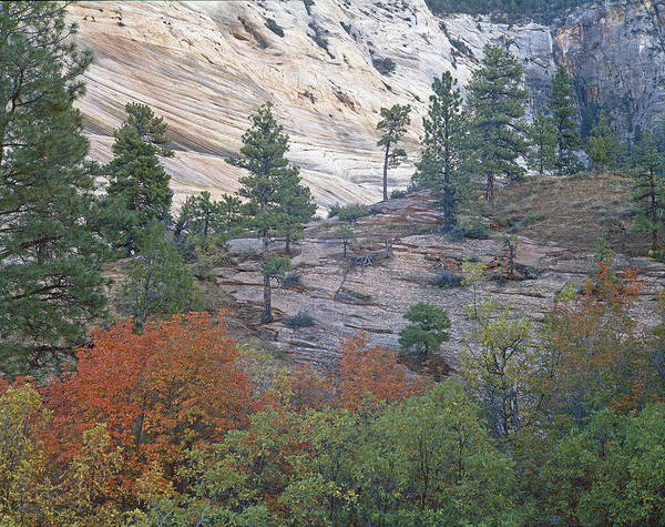 Photograph - Autumn In Zions National Park by Craig Ratcliffe
