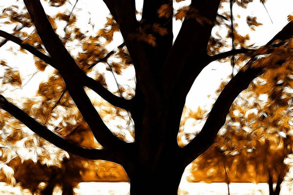 Photograph - Autumn Is Here  by Sotiris Filippou