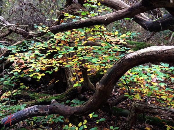 Photograph - Autumn Joy Denmark by Colette V Hera  Guggenheim