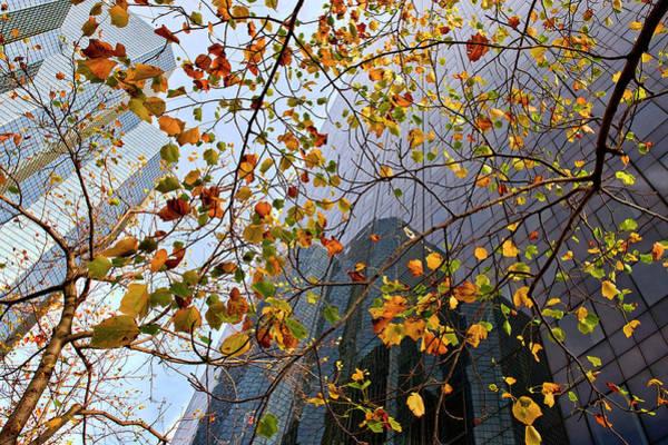 Perspective Wall Art - Photograph - Autumn by Jure Kravanja