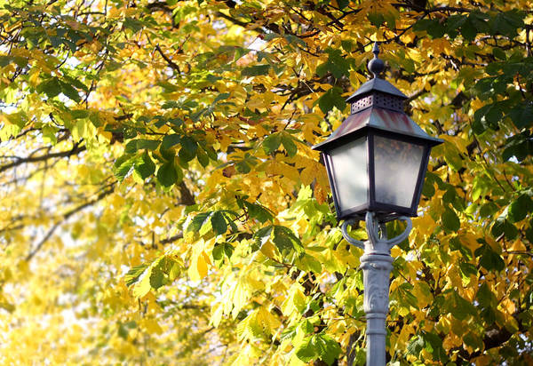 Photograph - Autumn Lamp Post by Dreamland Media