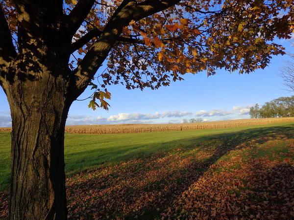 Cornfield Photograph - Autumn Landscape by Joseph Skompski