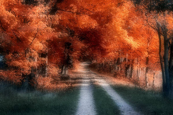 Orange Wood Photograph - Autumn Lane by Tom Mc Nemar