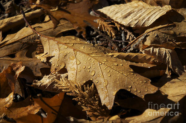 Photograph - Autumn Leaf At Dawn by Owen Weber