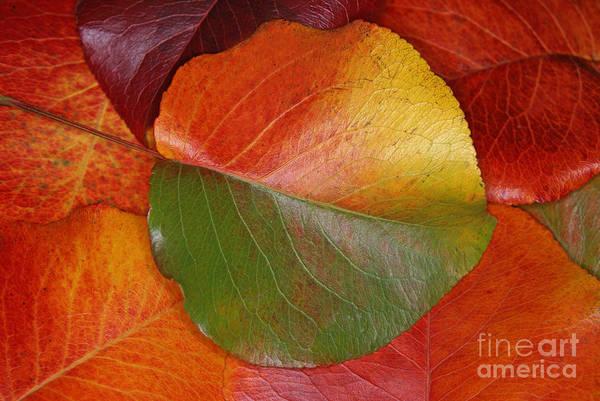 Photograph - Autumn Leaf by James H Robinson