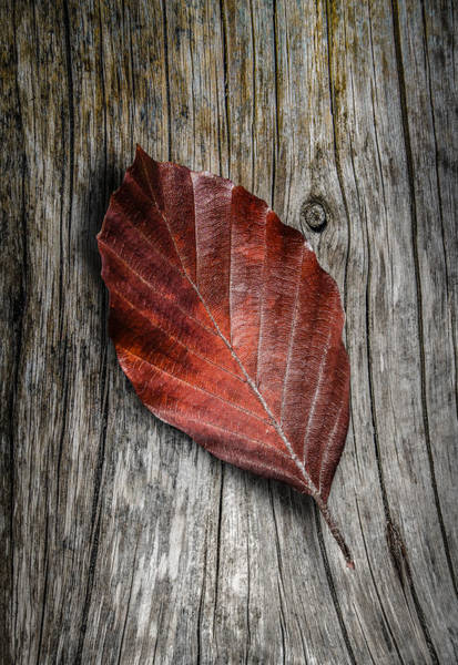 Wall Art - Photograph - Autumn Leaf On Wooden Background by Mr Doomits