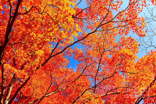 Photograph - Autumn Leaves And Blue Sky by Beverly Claire Kaiya