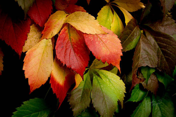 Photograph - Autumn Leaves by Angela Moyer