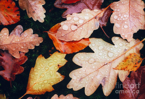 Photograph - Autumn Leaves by Art Wolfe