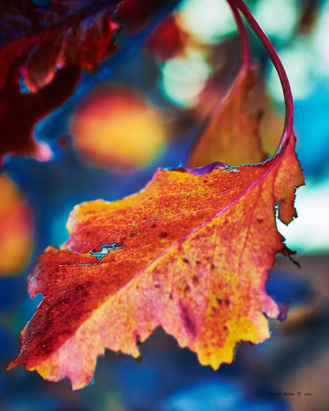Photograph - Autumn Leaves by Charles Muhle