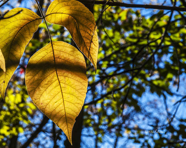 Photograph - Autumn Leaves by Edward Peterson