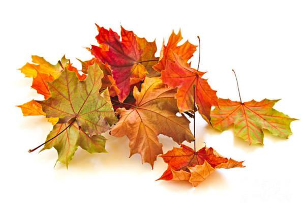 Photograph - Autumn Leaves by Elena Elisseeva