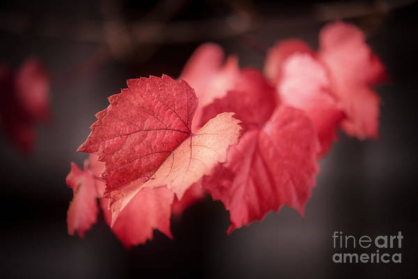 Photograph - Autumn Leaves II by Ray Warren