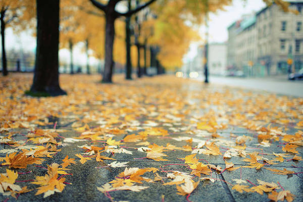 Quebec City Photograph - Autumn Leaves Lying On The Street by Preappy
