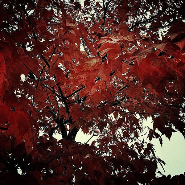 Photograph - Autumn Leaves by Natasha Marco
