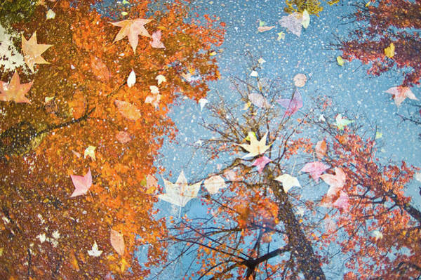 Okayama Prefecture Photograph - Autumn Leaves by Nazra Zahri