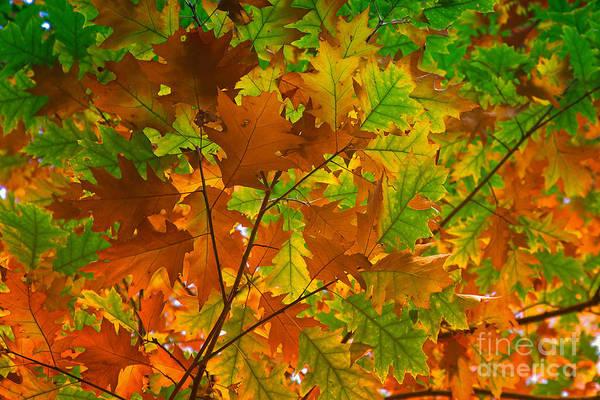 Photograph - Autumn Leaves by Nick  Biemans