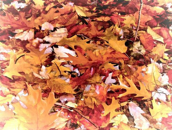 Autumn Leaves On The Ground In New Hampshire In Muted Colors Art Print