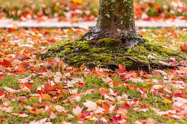 Photograph - Autumn Leaves  by Terry DeLuco