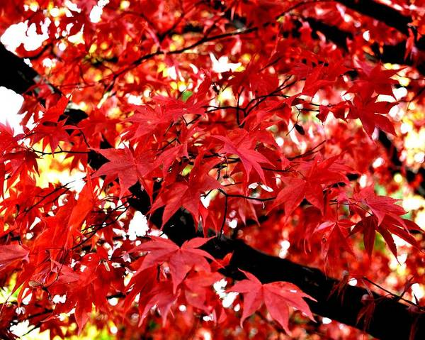 Photograph - Autumn Leaves by Toby McGuire