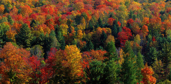 Pine Grove Photograph - Autumn Leaves Vermont Usa by Panoramic Images