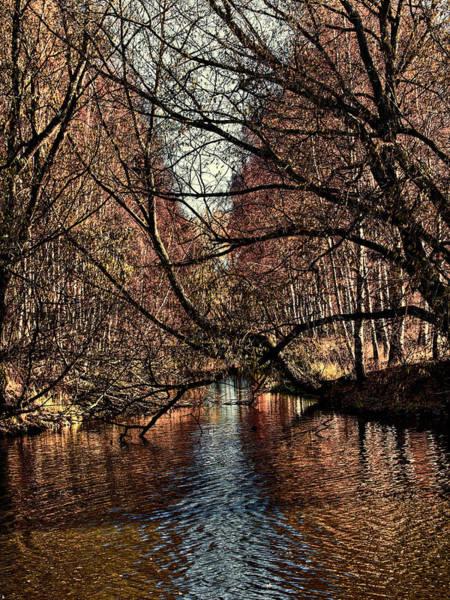 Photograph - Autumn Light By Leif Sohlman by Leif Sohlman